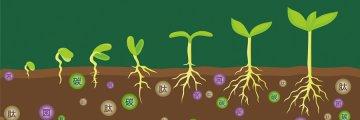 生物有机肥是如何接入菌种的?
