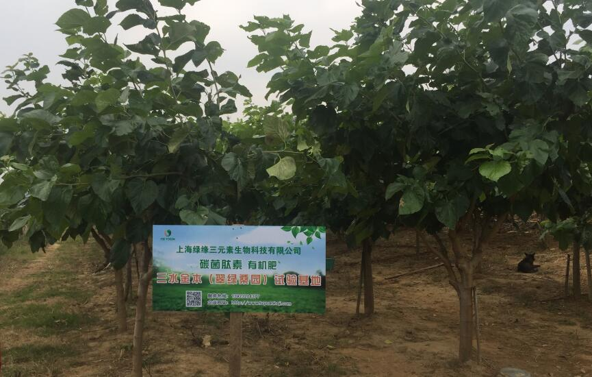 广东佛山桑果树碳菌肽素有机肥试验基地