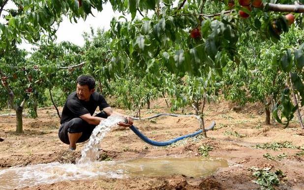 六月果园该不该浇水 ?