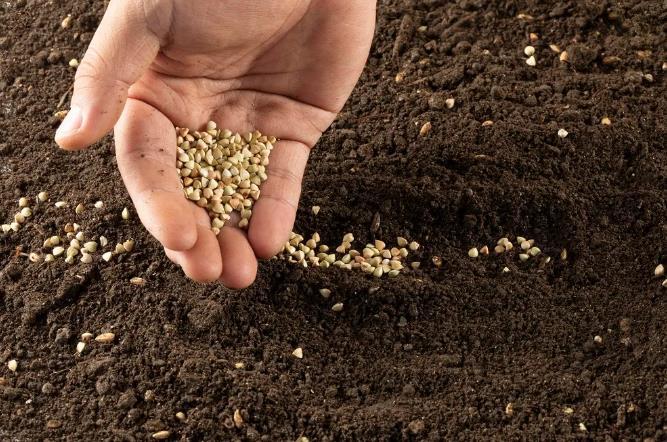 掌握这三种3种土壤特点,对优质高产栽培很关键!