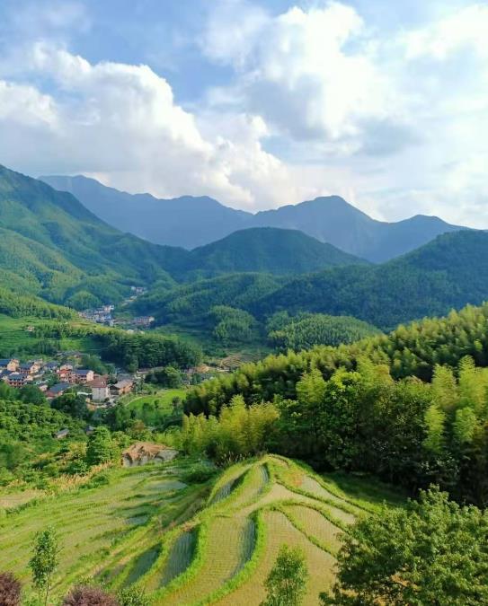 江西宜春温汤富硒生态大米碳菌肽素有机肥示范基地